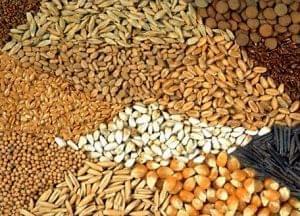 Подписано Соглашение об обращении семян в ЕАЭС