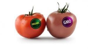Изменен порядок маркировки продуктов, содержащих ГМО
